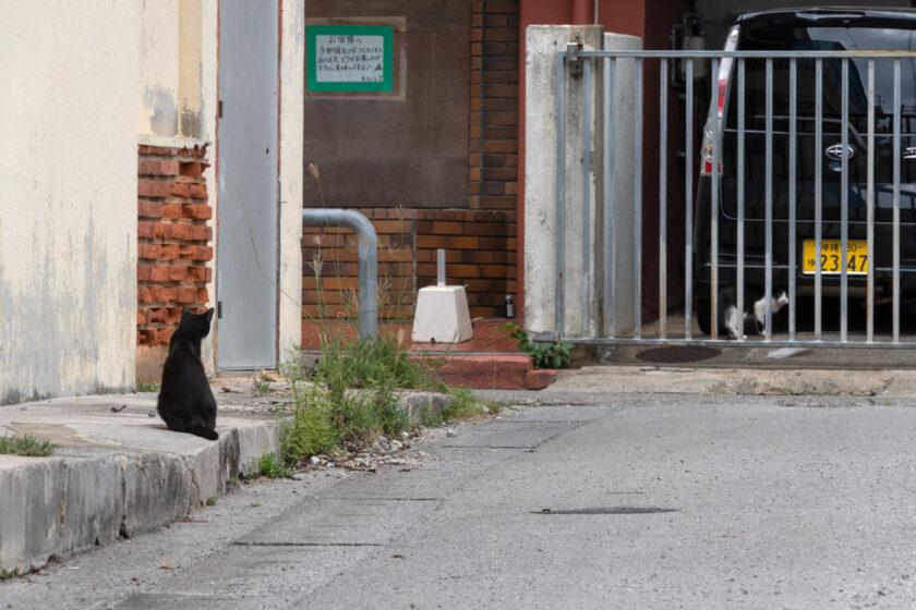 石垣市の猫