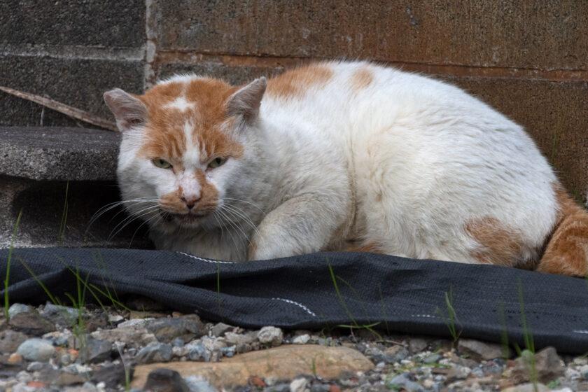 相模原市の猫