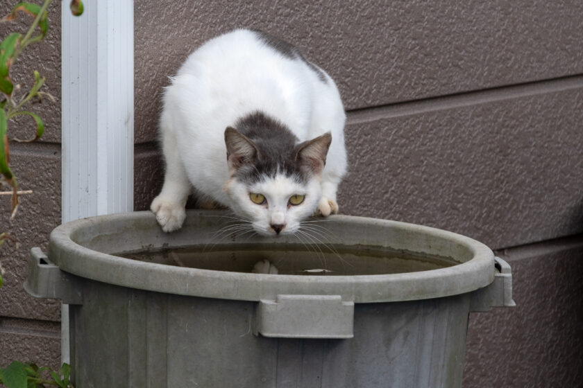 洋野町の猫