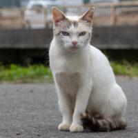 久慈市の猫