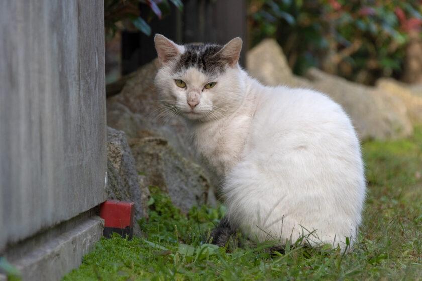 宮古市の猫