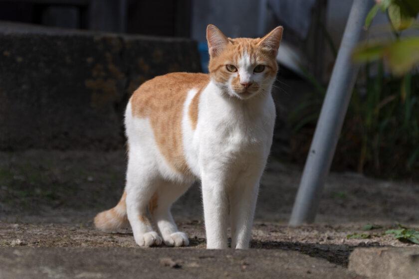 大衡村の猫