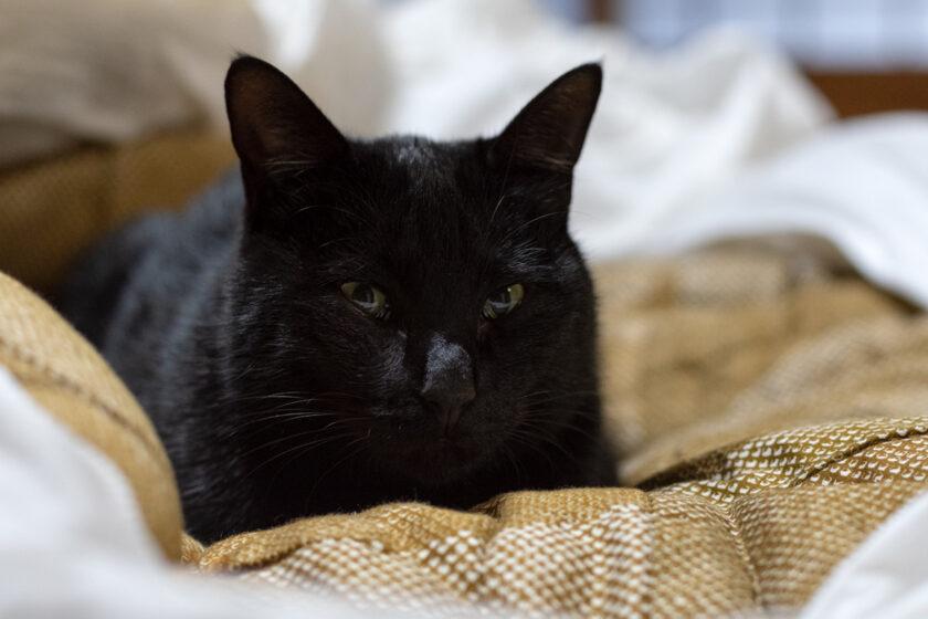 福島市の猫