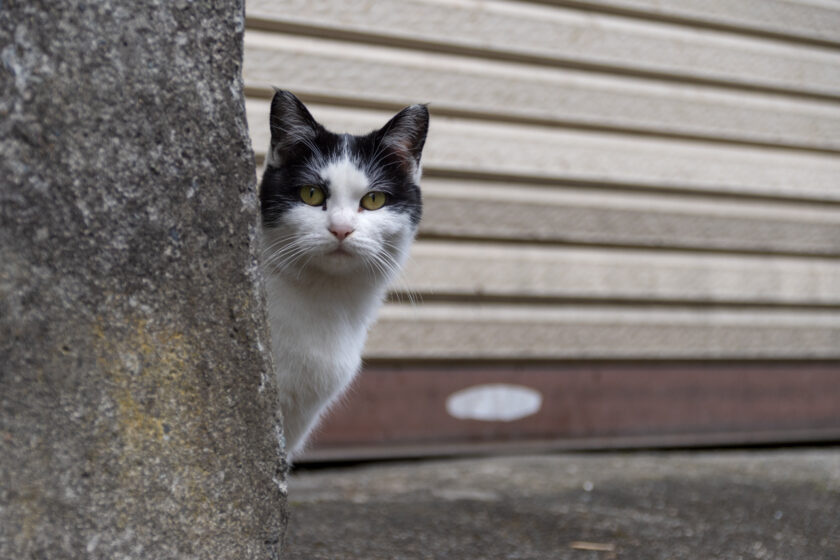 会津若松市の猫