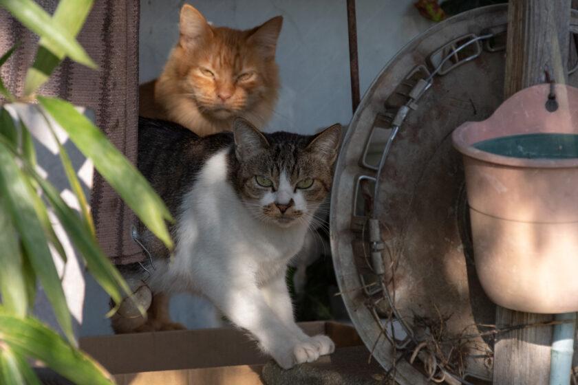 日光市の猫