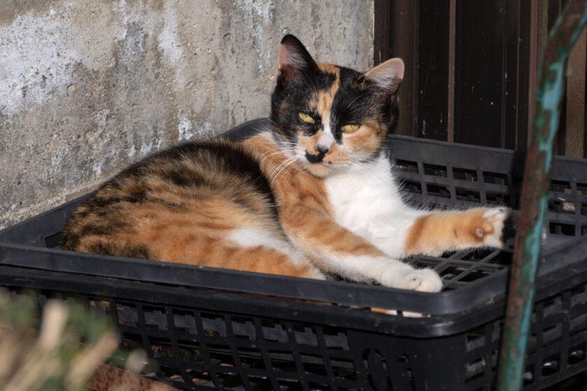 みなかみ町の猫