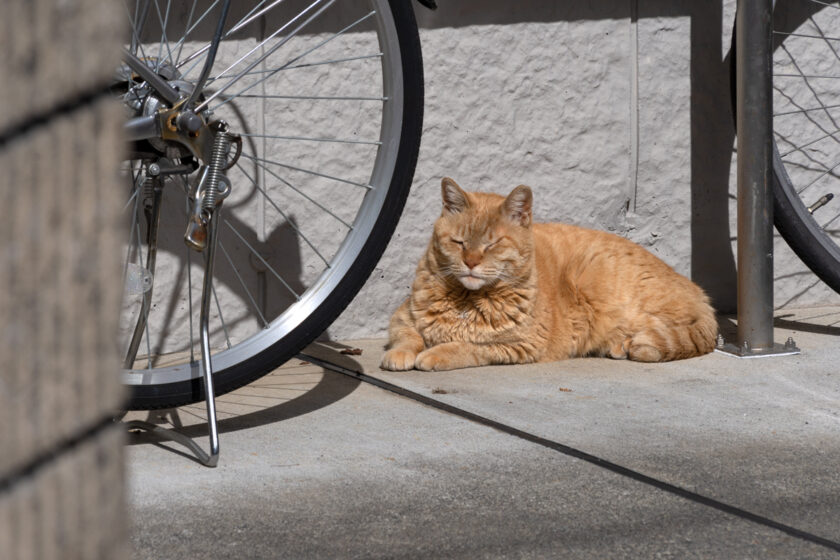 府中市の猫