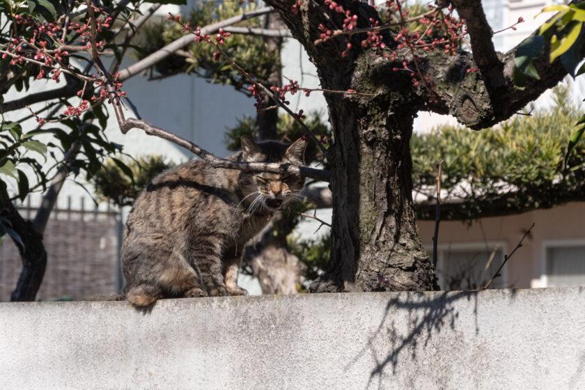 調布市の猫