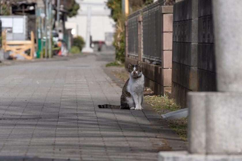 国立市の猫