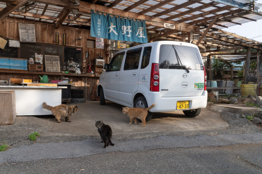 日高市の猫