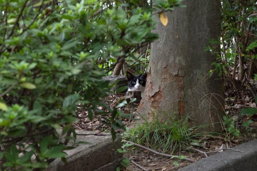 八王子市の猫