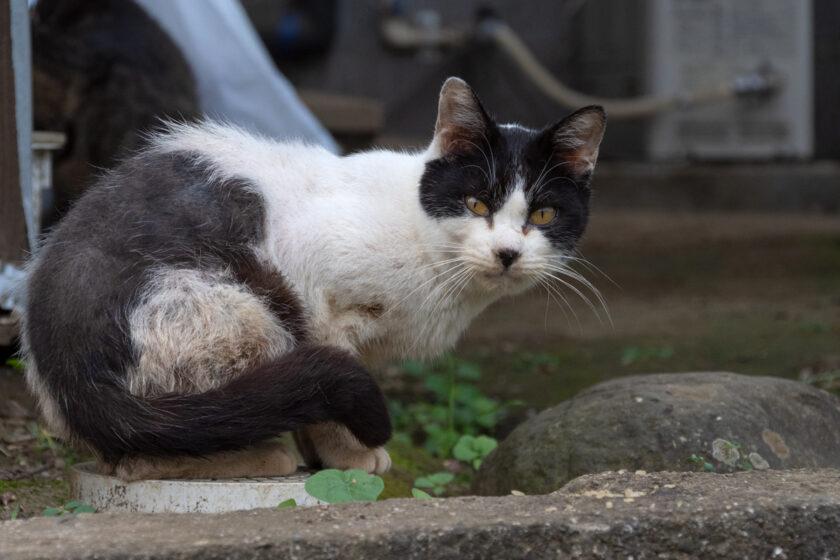 大月市の猫